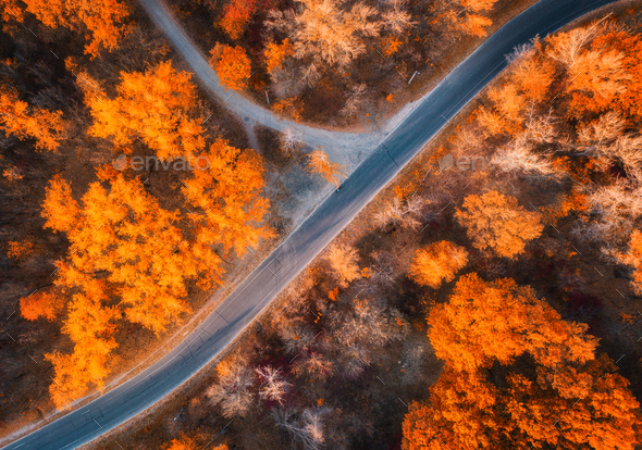 Aerial view of road in beautiful forest at sunset in autumn - Stock Photo - Images