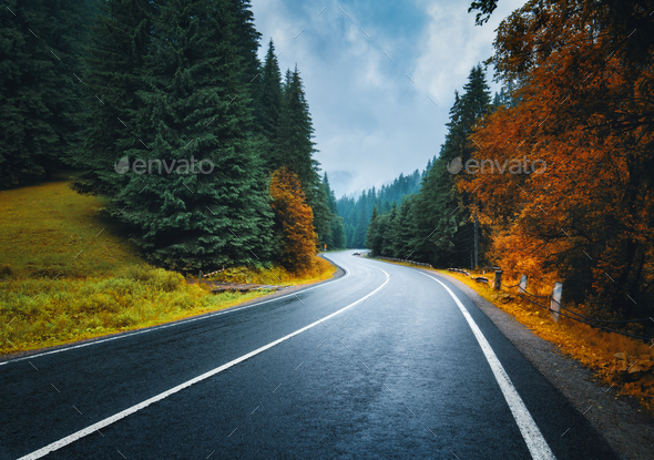 Road in autumn foggy forest at sunset in rainy day - Stock Photo - Images