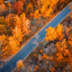 Aerial view of road in beautiful forest at sunset in autumn - PhotoDune Item for Sale