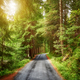 Scenic forest road. - PhotoDune Item for Sale