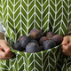 Woman holds fig in apron, front view - PhotoDune Item for Sale
