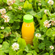 Diet, detox and healthy lifestyle concept. Fresh juice in bottle on a green grass - PhotoDune Item for Sale