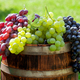 Various colorful grapes on wine barrel - PhotoDune Item for Sale
