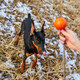 Man spend time with beautiful dog doberman outdoors - PhotoDune Item for Sale