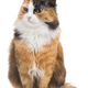 Tricolor young cat on a white background isolate - PhotoDune Item for Sale
