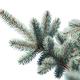 Blue spruce on white background isolate - PhotoDune Item for Sale