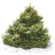 Christmas tree in the snow on a white background isolate - PhotoDune Item for Sale