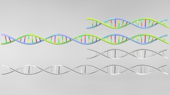 DNA strand model - 3DOcean Item for Sale