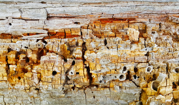Texture of decaying wood trunk with cracks and holes - Stock Photo - Images