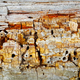 Texture of decaying wood trunk with cracks and holes - PhotoDune Item for Sale