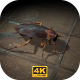 Cockroach - Walking - VideoHive Item for Sale