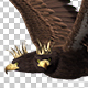 Imperial Eagle - Double-Headed - Flying Loop - Side Angle - VideoHive Item for Sale