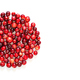 Natural forest cranberry. Red, ripe cranberries macro view. white background. copy space. up view - PhotoDune Item for Sale