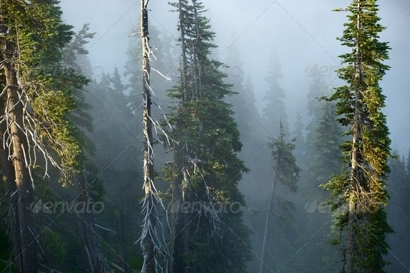 Foggy Mountain Forest - Stock Photo - Images