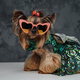 Canine pet yorkshire terrier breed weared in dress - PhotoDune Item for Sale