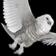 Arctic Owl - Flying Transition - I - Center Wave - VideoHive Item for Sale