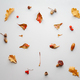 Creative autumn composition. Maple leaf silhouette on gray background with copy space. - PhotoDune Item for Sale