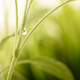 Waterdrop on green plant - PhotoDune Item for Sale