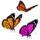 Flying Butterflies 60 FPS - VideoHive Item for Sale