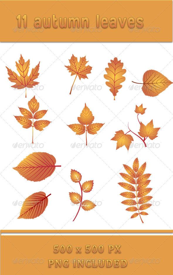 Autumn Leaves - Flowers & Plants Nature