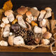 Large and small Forest mushrooms in wooden box on a dark background . Vegetarian food - PhotoDune Item for Sale