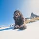 Shepherd dog - PhotoDune Item for Sale