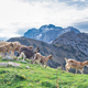 Goats on mountain - PhotoDune Item for Sale