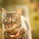 Gorgeous Gray Cat Outdoor Portrait In Sunny Day. Close Up - PhotoDune Item for Sale