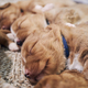 Cute dogs sleeping on blanket at home - PhotoDune Item for Sale