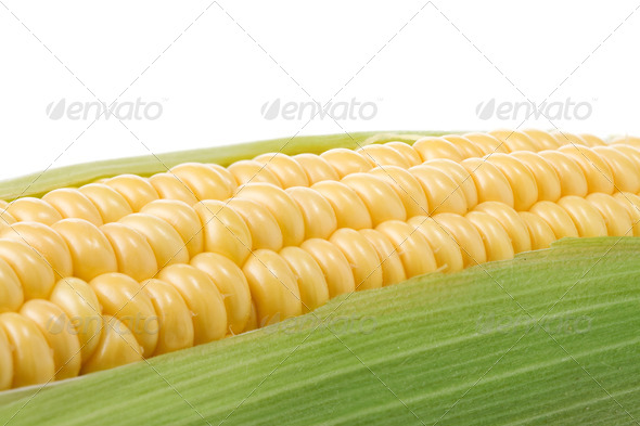 ripe yellow corn on white - Stock Photo - Images