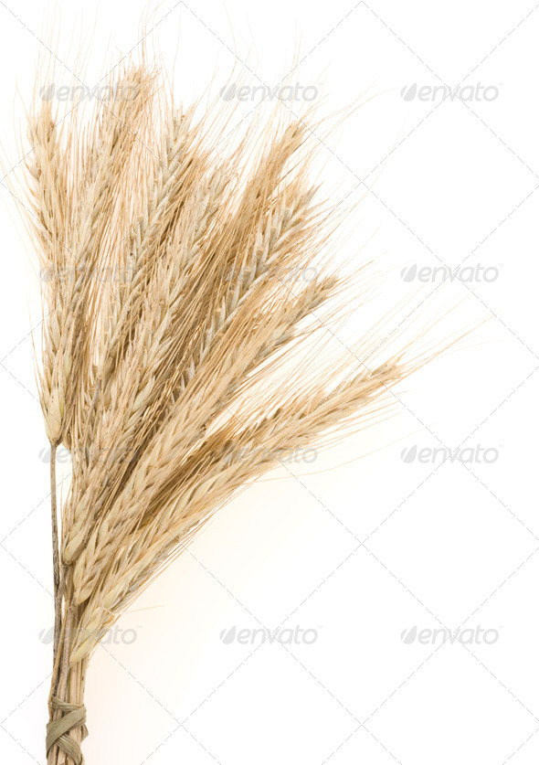 ear of rye bundle on white - Stock Photo - Images