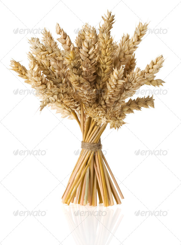ears of wheat  isolated on white - Stock Photo - Images