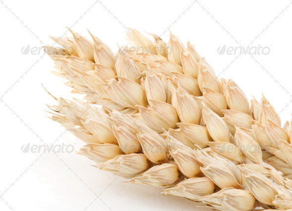 ear of wheat isolated on white - Stock Photo - Images