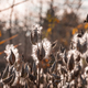 Autumn meadow - PhotoDune Item for Sale