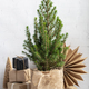 Zero waste eco Christmas and New Year concept - PhotoDune Item for Sale