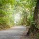 Asphalt way in forest with sunlight in background - PhotoDune Item for Sale