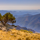 Sunny day over tree on Mont Aigoual - PhotoDune Item for Sale