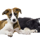 Crossbreed dog and cat, lying together, isolated on white - PhotoDune Item for Sale