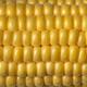 Fresh yellow sweet corn full frame close up - PhotoDune Item for Sale
