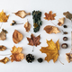 Seasonal autumn or fall still life with assorted leaves - PhotoDune Item for Sale