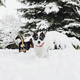 Dogs playing in a snowy park - PhotoDune Item for Sale