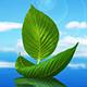 Gentle Healing Meditation