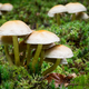A Small Group of Wild Mushrooms - PhotoDune Item for Sale