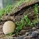 Mushroom Growing on Tree Bark with Moss - PhotoDune Item for Sale