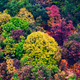 Autumn colors in mountain - PhotoDune Item for Sale
