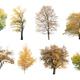 autumn trees isolated - PhotoDune Item for Sale