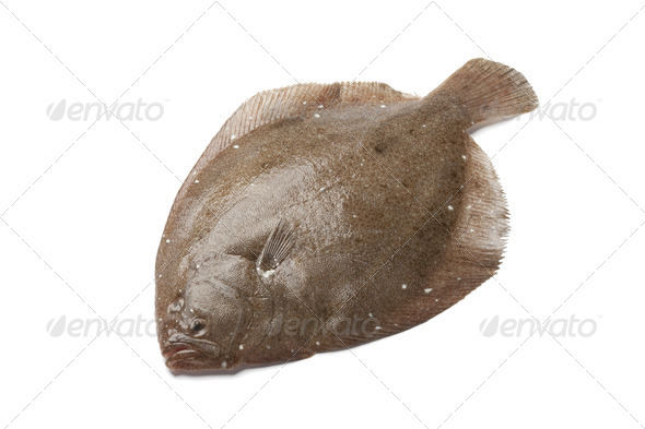 Whole single Brill fish - Stock Photo - Images