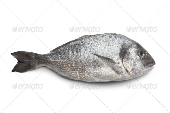 Whole single Dorade fish - Stock Photo - Images