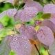 Water Drops on Dark Leaves - PhotoDune Item for Sale