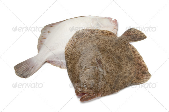 Pair of fresh Turbot fishes - Stock Photo - Images
